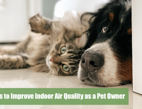 Tips to Improve Indoor Air Quality as a Pet Owner